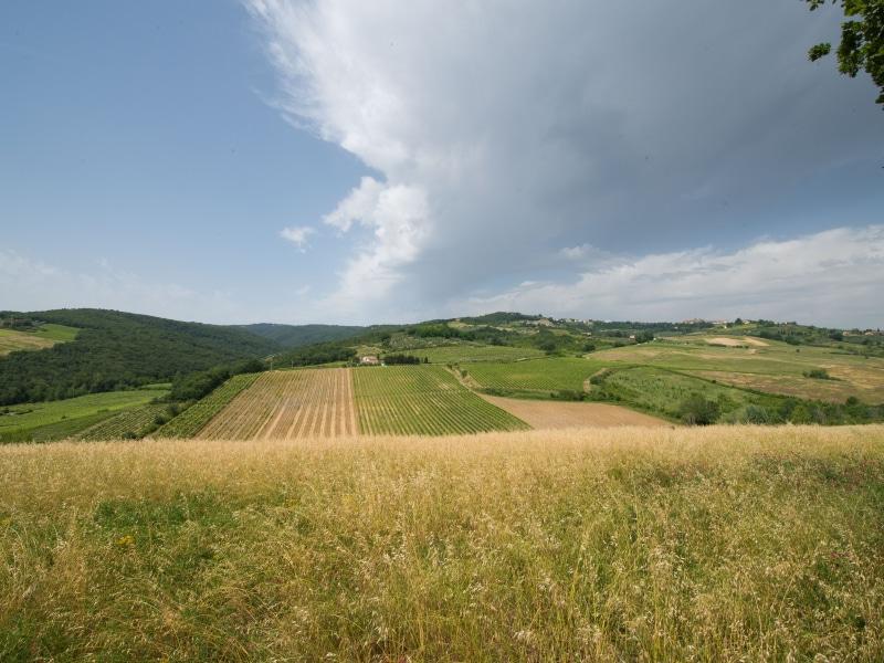 Azienda Agricola Casanuova - le colline della tenuta