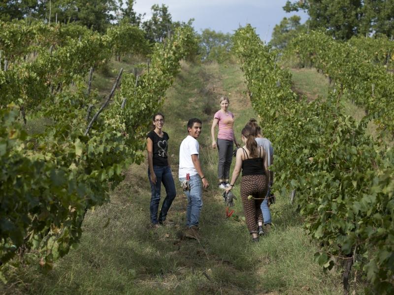 Vigneti di / Vineyards at Pompone e Pola Farm, Gambassi Terme