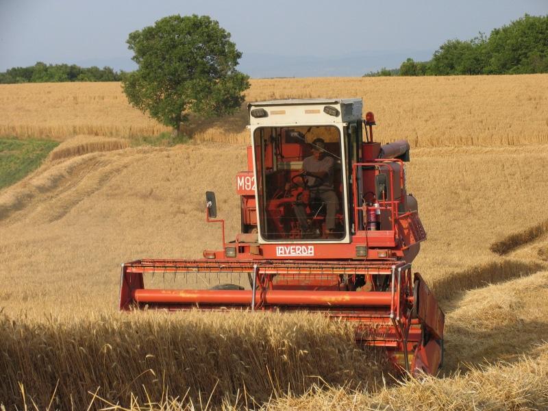 Poggio di Camporbiano - Mietitura del grano