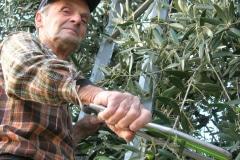 Renai e Monte Raccolta Olive